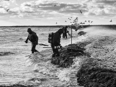 Iskalla vindar/Måkläppen
